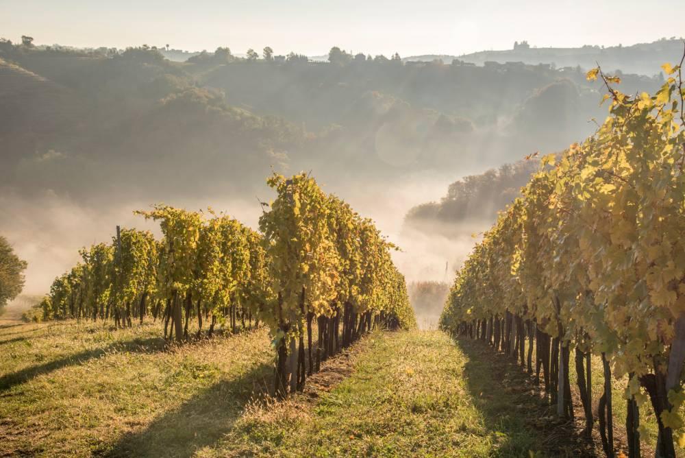 Вино и лозя